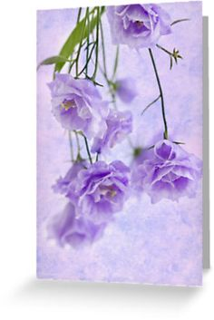 Campanella Blossoms Suspended - Macro by Sandra Foster
