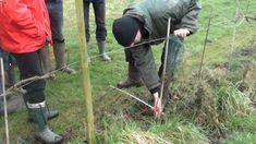 cursus Wintersnoei Druiven 2012 (Brabantse Wijnbouwers)