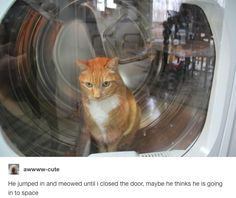 On astronauts:   23 Times Cats Were The Absolute Best Part Of Tumblr