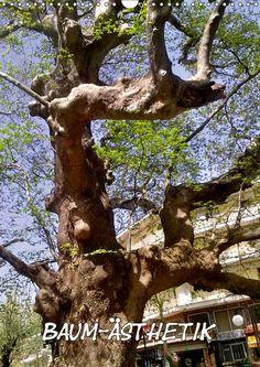 Baum-Ästhetik - CALVENDO