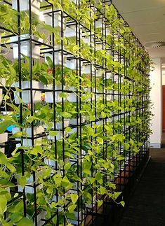 vertical garden space divider adds a fresh touch and is a unique solution Garden Dividers, Space Dividers, Dividers For Rooms, Office Dividers, Wall Dividers, Plant Wall, Plant Decor, Living Room Divider, Room With Plants