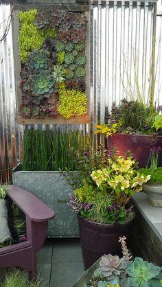 Succulent wall garden. succulent planters - garden - vertical gardening - garden innovation