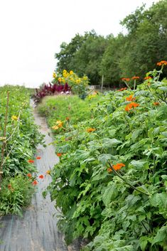 Grow organic flowers in your garden. It is a more sustainable way to decorate your home with flowers than with the bouquets you buy in stores. It can be your new hobby. Potting Sheds, Grow Organic, New Hobbies, Garden Beds, Nye, Decorating Your Home, Sustainability, Holland, Mexican