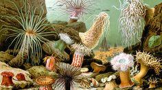<p>22/01/2016/ Wikipedia.org / Giacomo Merculiano/ RT Los científicos suponen que el cambio de polos magnéticos de la Tierra incentivó la evolución. La revista científica 'Science'publica unestudio del geólogo Joseph Meert, de la Universidad de Florida (EE.UU.), en el que desarrolla…</p>