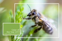 Wiosna - nowe początki.   #wiosna #kolorywiosny #kolor2017 #pantone #zielony #15-0343 #othsim   @pantone #Color #of #the #Year #2017