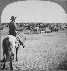 Image result for lasso cowboy