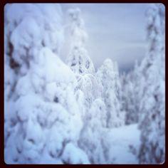 Winter Wonderland - Finland.