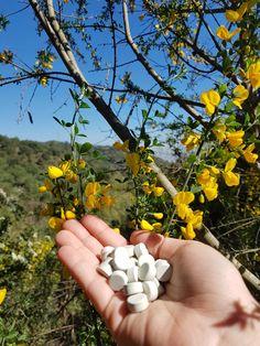 Natural-With Herbs-Vegan Dental, Herbs, Vegan, Natural, Herb, Teeth, Vegans, Nature, Dentist Clinic