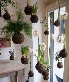 "String gardens (""Kokedama"") is basically the Japanese art of enclosing a plants roots in a moss ball and suspending that plant – sort of a hanging bonsai concept.How to make a Hanging Garden, Kokedama DIY A lot of people seem to be getting into Moss Garden, Garden Art, Garden Plants, Herb Garden, Water Garden, Garden Kids, Big Garden, Bonsai Garden, Vegetable Garden"