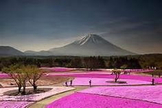 Another shot from my Mt Fuji trip a few months ago. Fuji Shibazakura(Moss Phlox) Festival, I have been wanting to see this festival for a few years now. It's not very often that Mt Fuji is clear. Places Around The World, The Places Youll Go, Places To See, Around The Worlds, Travel Pictures, Travel Photos, Travel Images, Monte Fuji, Japan Holidays