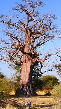 Wheretostay Namibia: Travel Planner & Routes into Namibia Land Of The Brave, Weird Trees, Provinces Of South Africa, Twisted Tree, Namibia, Okavango Delta, Romantic Places, Travel Planner, Central America