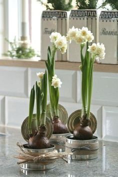 Christmas Paperwhites – Friday Favorites Christmas Paperwhites – Friday Favorites<br> Forcing paperwhites to bloom for Christmas Spring Flowers, White Flowers, Beautiful Flowers, Winter Wedding Decorations, Flower Decorations, Ikebana, Deco Nature, Decoration Plante, Garden Bulbs
