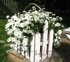 Sweet little picket fence container planted in all white verbena and petunias