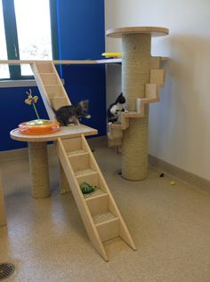 NEAS Community Cat Room Detail - I love the spiral staircase sisal scratching post!