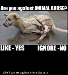 Anyone who abuses an animal should have to endure what they have inflicted a hundred fold... forever.