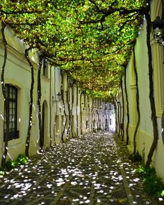 20 of the most beautiful streets in the world Jerez de la Frontera: Andalusia, Spain. Beautiful Streets, Beautiful World, Beautiful Places, Beautiful Gardens, Beautiful Pictures, Landscape Architecture, Landscape Design, Beautiful Architecture, Chinese Architecture