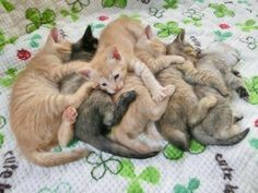 A pile of kittens!
