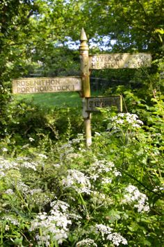 Cornish lanes in the summer . . . . old signpost surrounded in gorgeous cowparsley . . . .