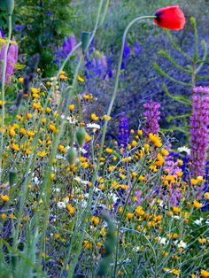 Wild Flowers for the someday garden