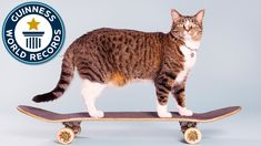 Didga the Skateboarding Cat Sets the World Record for Most Tricks by a Cat in One Minute
