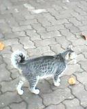 """кошки из пансионата """"Изумруд"""""""