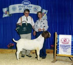 Powell Holman Reserve Grand Champion Buck Show Goats For