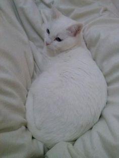 LUZ - Gato adoptado - AsoKa el Grande