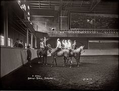 Shorpy Historical Photo Archive :: Horse basketball