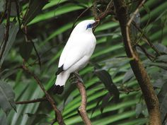 Dominic Couzens tells the stories of 50 of the rarest birds in the world