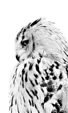 White owl, posters in the group Posters / Formats / at Desenio AB Elephant Poster, Lion Poster, Poster Poster, Desenio Posters, Poster Photo, Gold Poster, New York Poster, Poster Store, Owl Photos