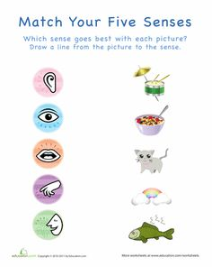 Worksheets: Your Five Senses: Matching 1