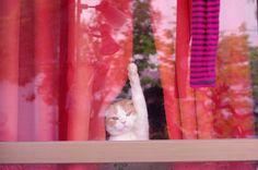 {kitty waving} hello or goodbye? :)