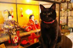 Hinamatsuri cats