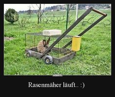 Funny pictures about Eco-Friendly Mower. Oh, and cool pics about Eco-Friendly Mower. Also, Eco-Friendly Mower photos. Jokes Photos, Funny Photos, Tierischer Humor, Humour Quotes, Life Humor, Humor Grafico, Lawn Care, Inventions, Funny Jokes