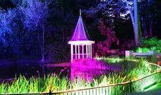 Image result for wellington city botanical gardens Wellington City, Botanical Gardens, Gazebo, Backyard, Outdoor Structures, Lights, Landscape, Plants, Image