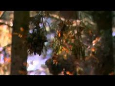 Boris Kovac & La Campanella - Argentina (music video)