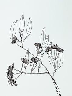 Flowering Gum Branch - Botany Lane Print by Kate Durham Botanical Drawings, Botanical Art, Botanical Illustration, Australia Tattoo, Native Tattoos, Australian Native Flowers, Floral Drawing, Flower Sketches, Ink Pen Drawings