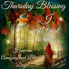 Thursday Blessing. Psalm 56:3-Have an Amazing and Blessed Day!!