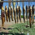 #Prepper #Foodstorage #LostSkills - How to Salt Fish to Preserve it