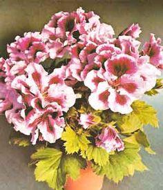 Flores de gran colorido