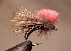 Colorado Fly Fishing Reports: Clown Shoe Caddis Hits Fly Bins!