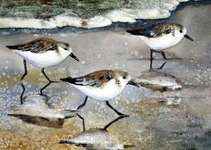 Sand Pipers by Mary Gibbs
