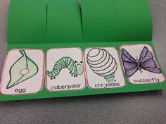 The Very Hungry Caterpillar No Prep Activity Pack Perfect addition to an Eric Carle author study, insect, bug or spring unit! Preschool (PreK), Kindergarten (K), First Grade (Grade Grade) and Special Ed friendly. Plus NO PREP! Life Cycle of a But Eric Carle, Spring Activities, Preschool Activities, Butterfly Life Cycle, Lifecycle Of A Butterfly, Theme Nature, Author Studies, Kindergarten Science, Life Cycles