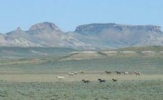 big piney wyoming | Big Piney, WY : 2010 Wild Mustang Adventure