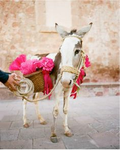 Most brides dream of arriving in a white horse drawn carraige...I want a wedding burro