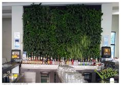 The #verticalgarden finished its journey and landed on a wall. Come and see it live in all its beauty!