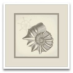 Epic Art Cousteau's Sketchpad Tina's Shells II Wall Art | Wayfair