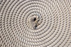 Picture of Coiled Navy Boat Rope St Johns Harbour Avalon Peninsula