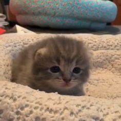 Kittens And Puppies, Cute Cats And Kittens, Kittens Cutest, Super Cute Kittens, Small Kittens, Tiny Kitten, Ragdoll Kittens, Tabby Cats, Funny Kittens