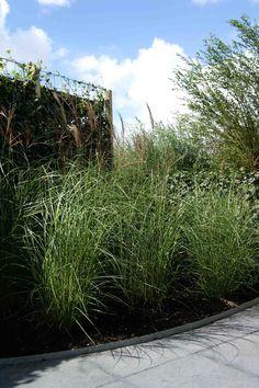 miscanthus /  grassen  Hoveniersbedrijf van Elsäcker Tuin www.tuintuintuin.nl